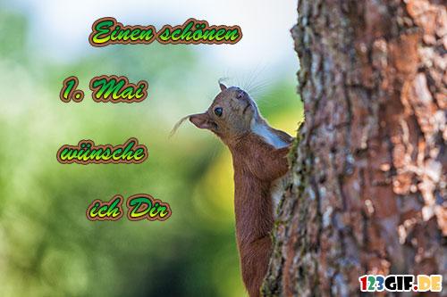 Eichhörnchen von 123gif.de