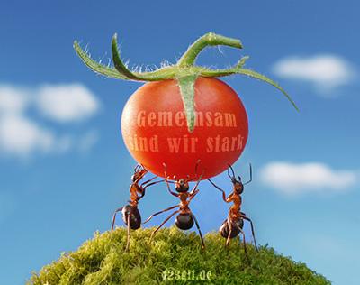 Ameisen von 123gif.de
