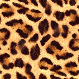 Leopard von 123gif.de