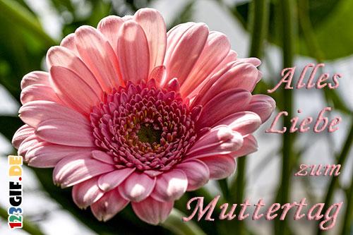 muttertag-0125.jpg von 123gif.de Download & Grußkartenversand