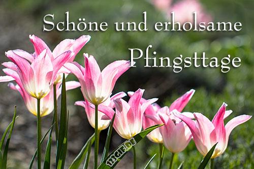 Pfingsten von 123gif.de