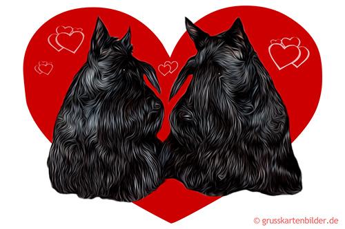 scottish-terrier-0001.jpg von 123gif.de Download & Grußkartenversand