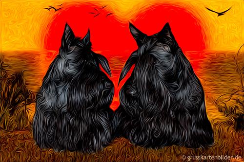 scottish-terrier-0002.jpg von 123gif.de Download & Grußkartenversand